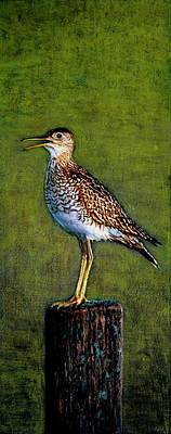 Acrylics Painting - Sandpiper by Kimberly Shinn