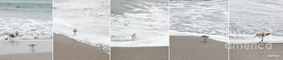 Sandpiper Photograph - Sandpiper Sequence by Michelle Wiarda