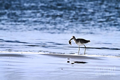 Sandpiper Photograph - Sandpiper by Stephanie Frey