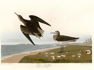 Sandpiper Drawing - Sandpipers On The East Coast Of Florida by Mountain Dreams