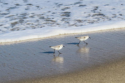 Sandpipers Photograph - Sandpipers by Zina Stromberg
