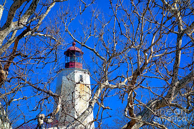 Guiding Light Photograph - Sandy Hook Lighthouse Through Trees by Olivier Le Queinec