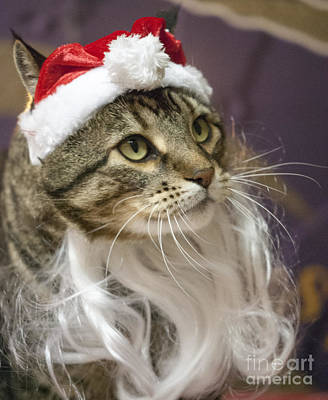 Harry Photograph - Santa Cat by Juli Scalzi