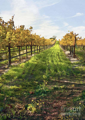 Santa Maria Vineyard Print by Sharon Foster