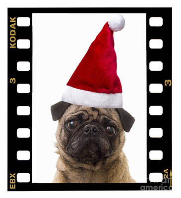 Puppy Christmas Photograph - Santa Pug - Canine Christmas by Edward Fielding