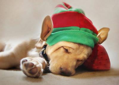 Labrador Retriever Digital Art - Santa's Helper by Lori Deiter