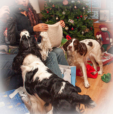 Puppy Photograph - Santa's Helpers by Steve Harrington