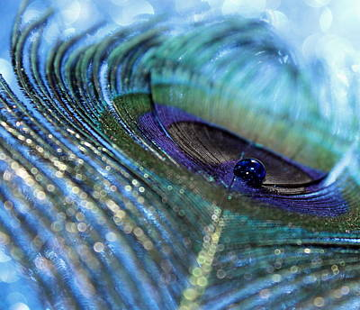 Peacock Photograph - Saphire Blues by Krissy Katsimbras