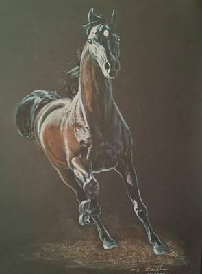 Cavalli Painting - Saragos Arabian Horse Stallion by Dorota Zdunska