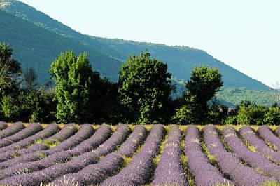 Sergio Photograph - Sault, Provence, France by Sergio Pitamitz