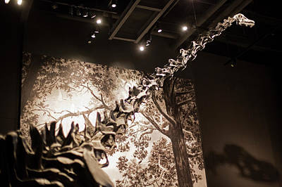 North American Wildlife Photograph - Sauropod Dinosaur Fossil Display by Jim West