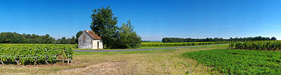 Cher Photograph - Sauvignon Blanc Vineyard, Pouille by Panoramic Images