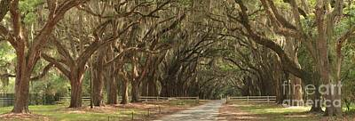 Georgia Plantation Photograph - Savannah Avenue Of The Oaks Panorama by Adam Jewell
