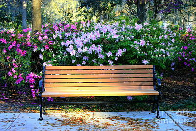 Park Benches Photograph - Savannah Bench by Carol Groenen