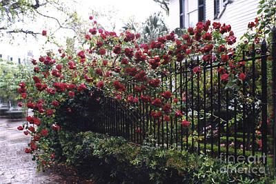 Savannah Nature Photograph - Savannah Georgia Red Roses And Gates Architecture by Kathy Fornal