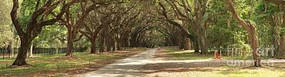 Georgia Plantation Photograph - Savannah Oaks Panoramic by Adam Jewell