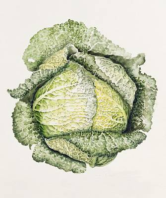 Cabbage Painting - Savoy Cabbage  by Alison Cooper