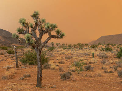 Pioneertown Photograph - Sawtooth Glow by Steve Brown