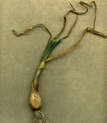 Scallion Print by Bob RL Evans