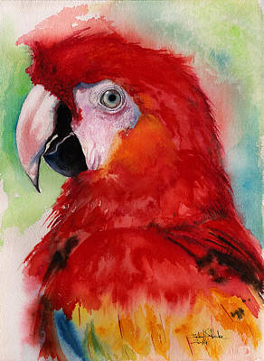 Macaw Drawing - Scarlet Macaw by Isabel Salvador
