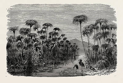 Ibis Drawing - Scene On A Tributary Of The Nile Bulrushes by Litz Collection