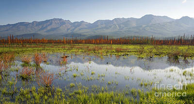 Nature Photograph - Scenic Marsh Water Panoramic Mountain Landscape Outback Alaska by Christopher Boswell