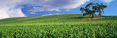 Luis Photograph - Scenic View Of A Vineyard, Paso Robles by Panoramic Images