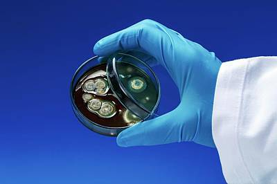 Scientist With Petri Dish Print by Wladimir Bulgar