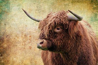 Scottish Highland Steer Print by Steve McKinzie