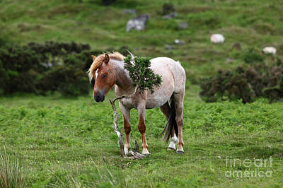 Bodmin Photograph - Scratch That Itch by James Brunker