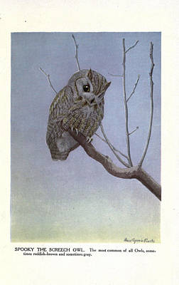 Professional Drawing - Screech Owl by Philip Ralley