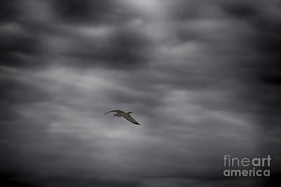 Sea Gull Print by Jeremy Linot