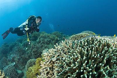 Adventuresome Photograph - Sea Krait And Scuba Diver, Apo Island by Stuart Westmorland