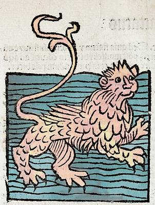 Sea Lion Print by Paul D Stewart