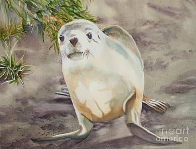 Sea Lion Pup Print by Amanda Schuster