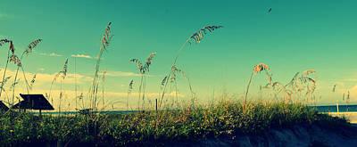 Florida Flowers Digital Art - Sea Oats Under The Morning Sun In Sarasota by Patricia Awapara