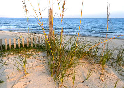 Sea Oats With Setting Sun Highlights Original by Laurie Pike