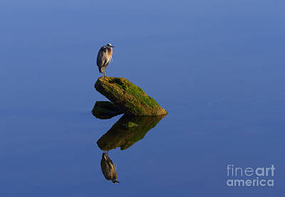 Heron Photograph - Sea Of Tranquility by Mike  Dawson
