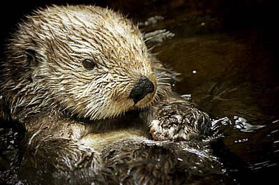 Otter Digital Art - Sea Otter by Maria Angelica Maira