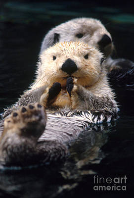 Otter Photograph - Sea Otter Pup by Mark Newman