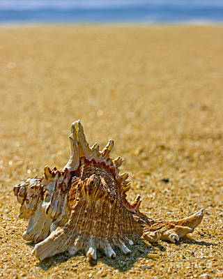Sea Shell Photograph - Sea Shell By The Sea Shore by Tom Gari Gallery-Three-Photography