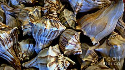 Sea Shells 2 Print by Cheryl Young