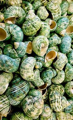 Sea Shells 3 Print by Cheryl Young