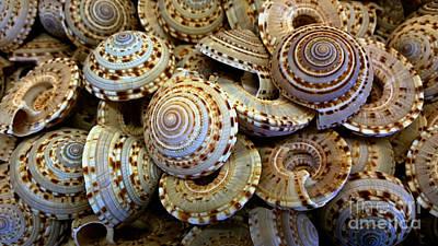 Sea Shells Print by Cheryl Young