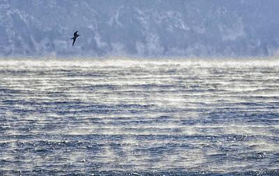 Sea Smoke And Gull Blues Print by Marty Saccone