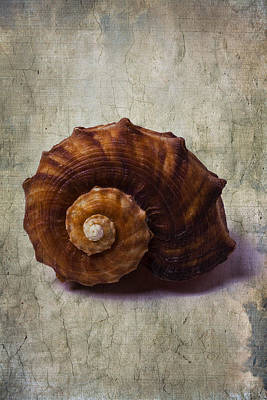 Shell Texture Photograph - Sea Snail by Garry Gay