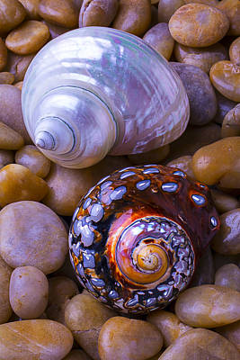 Spiral Photograph - Sea Snail Shells by Garry Gay