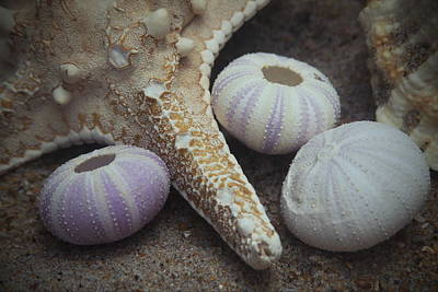 Star Photograph - Sea Star And Sea Urchins by Cathy Lindsey