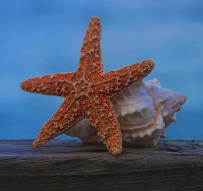 Starfish Photograph - Sea Star And Shell by Cathy Lindsey