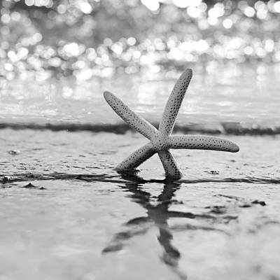 Sea Star Bw Print by Laura Fasulo